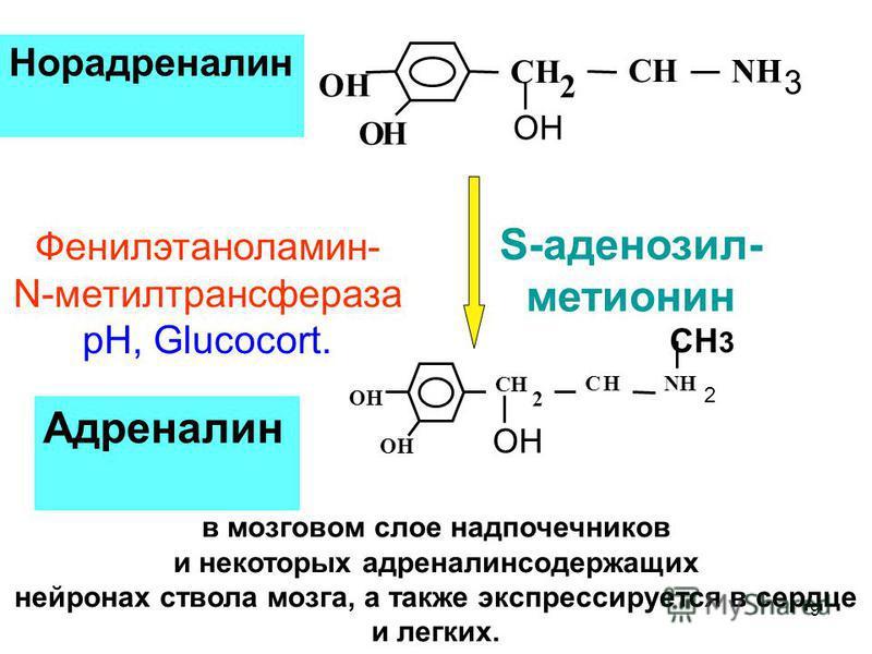 ОН NH 3 ОН СН 2 СН Норадреналин ОН NH 2 ОН СН 2 СН СН 3 Адреналин Фенилэтаноламин- N-метилтрансфераза pH, Glucocort. S-аденозил- метионин в мозговом слое надпочечников и некоторых адреналин содержащих нейронах ствола мозга, а также экспрессируется в