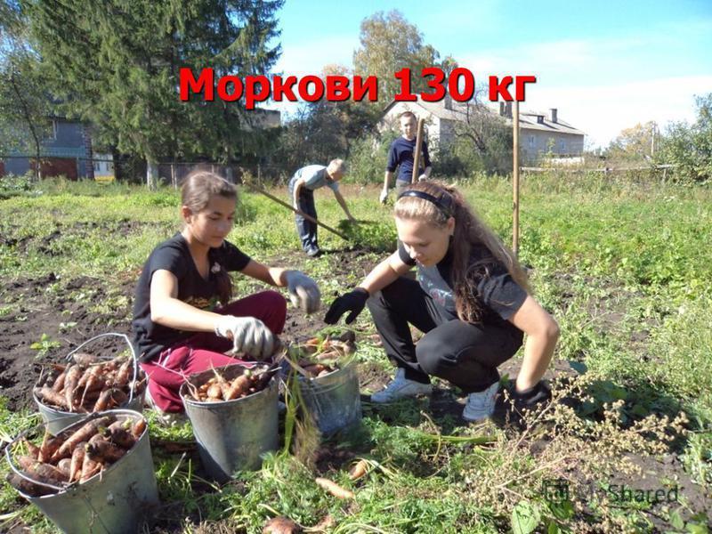 Моркови 130 кг