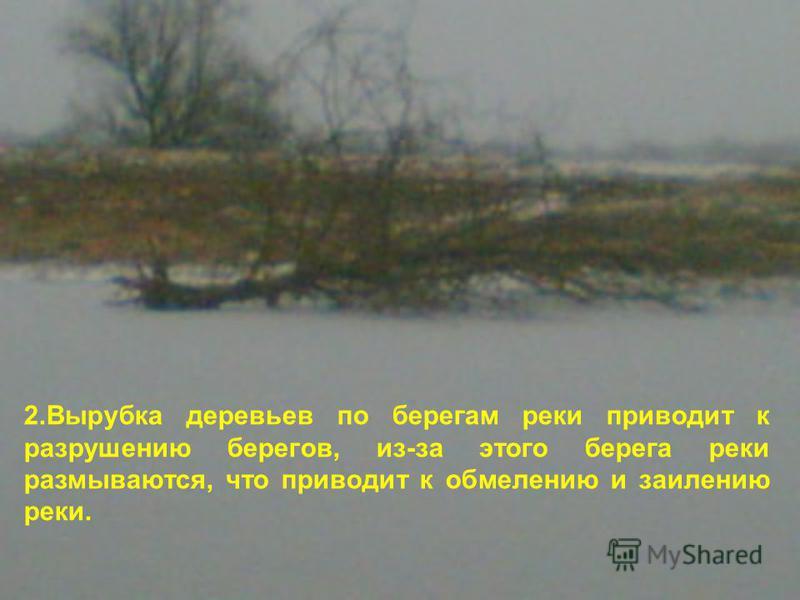 2. Вырубка деревьев по берегам реки приводит к разрушению берегов, из-за этого берега реки размываются, что приводит к обмелению и заилению реки.