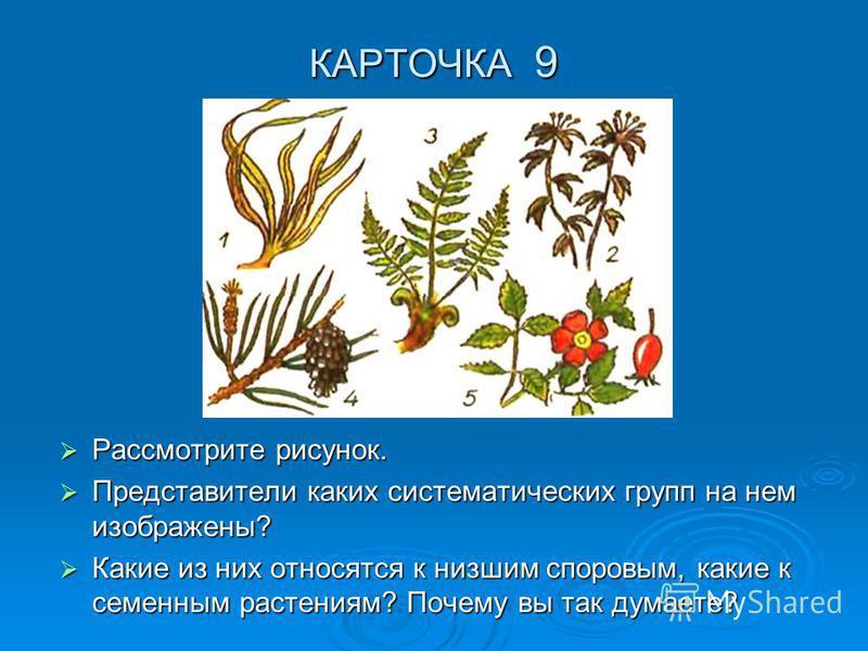 КАРТОЧКА 9 Рассмотрите рисунок. Рассмотрите рисунок. Представители каких систематических групп на нем изображены? Представители каких систематических групп на нем изображены? Какие из них относятся к низшим споровым, какие к семенным растениям? Почем