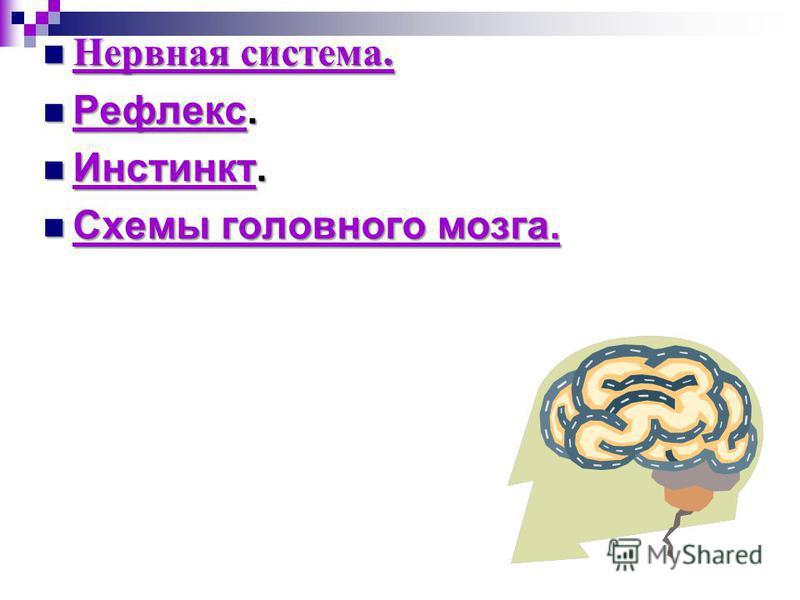 Нервная система. Нервная система. Нервная система. Нервная система. Рефлекс. Рефлекс. Рефлекс Инстинкт. Инстинкт. Инстинкт Схемы головного мозга. Схемы головного мозга. Схемы головного мозга. Схемы головного мозга.