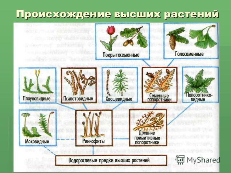 Происхождение высших растений