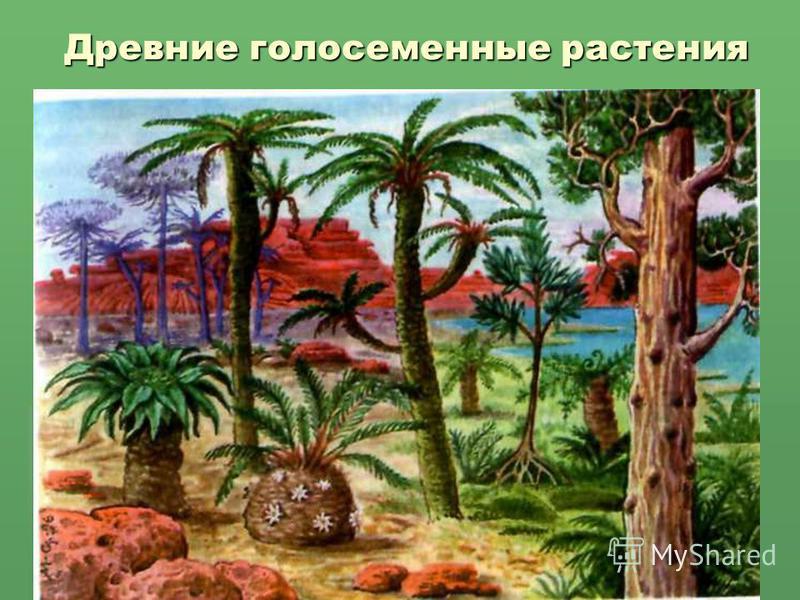 Древние голосеменные растения