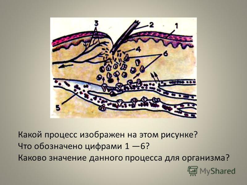 Какой процесс изображен на этом рисунке? Что обозначено цифрами 1 6? Каково значение данного процесса для организма?