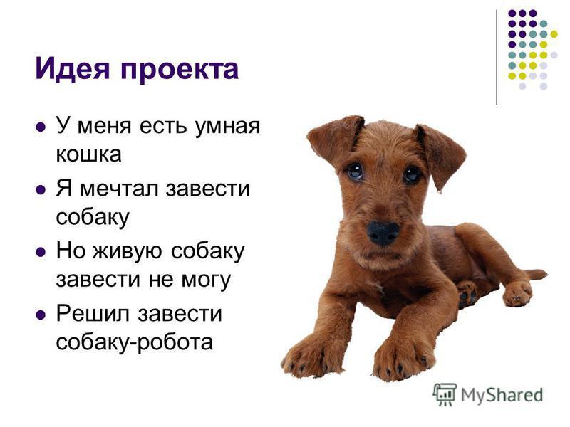 Идея проекта У меня есть умная кошка Я мечтал завести собаку Но живую собаку завести не могу Решил завести собаку-робота