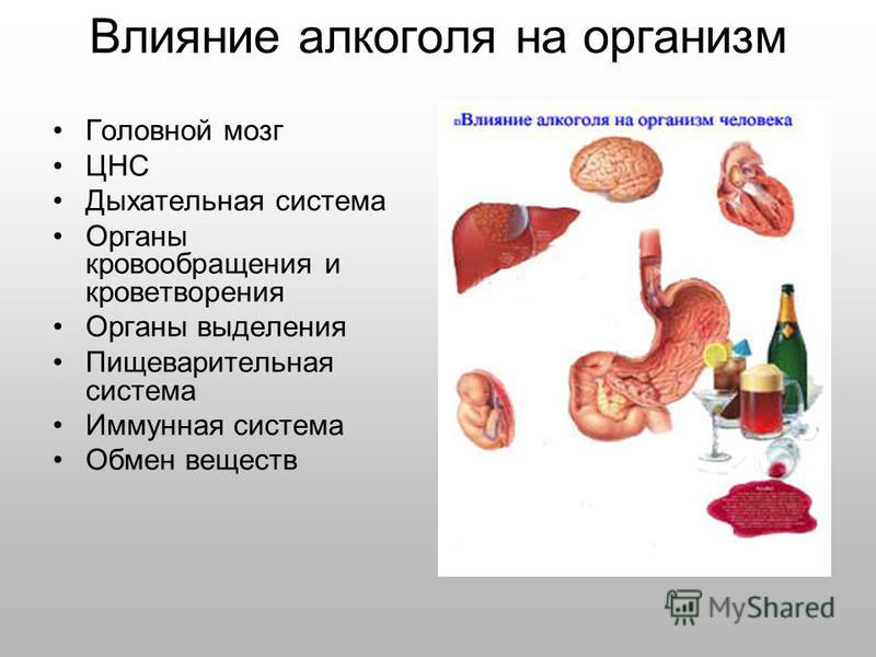 Влияние алкоголя на организм Головной мозг ЦНС Дыхательная система Органы кровообращения и кроветворения Органы выделения Пищеварительная система Иммунная система Обмен веществ