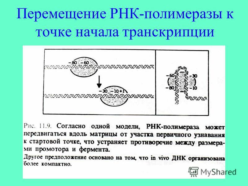Перемещение РНК-полимеразы к точке начала транскрипции