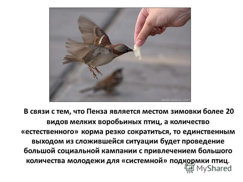 В связи с тем, что Пенза является местом зимовки более 20 видов мелких воробьиных птиц, а количество «естественного» корма резко сократиться, то единственным выходом из сложившейся ситуации будет проведение большой социальной кампании с привлечением