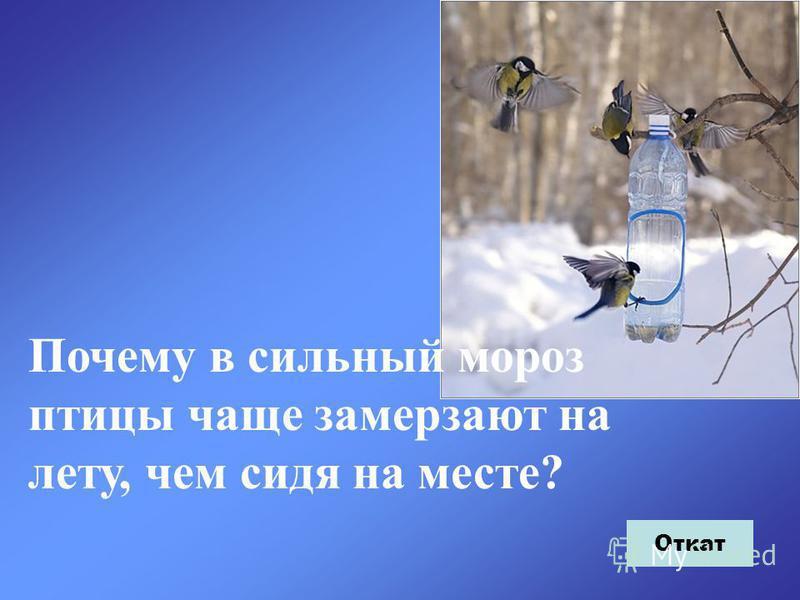 Почему в сильный мороз птицы чаще замерзают на лету, чем сидя на месте? Откат