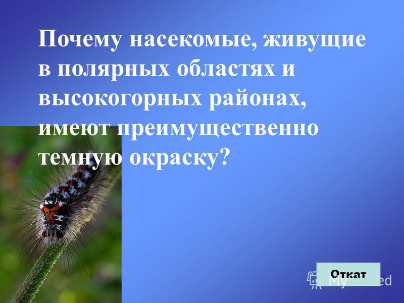 Почему насекомые, живущие в полярных областях и высокогорных районах, имеют преимущественно темную окраску? Откат