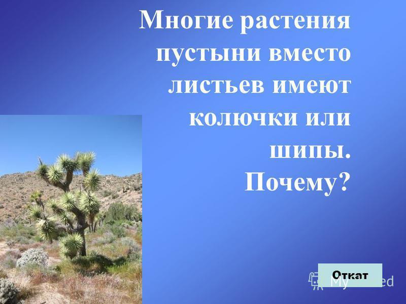 Многие растения пустыни вместо листьев имеют колючки или шипы. Почему? Откат