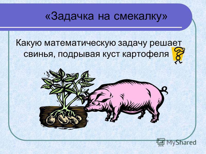 «Задачка на смекалку» Какую математическую задачу решает свинья, подрывая куст картофеля