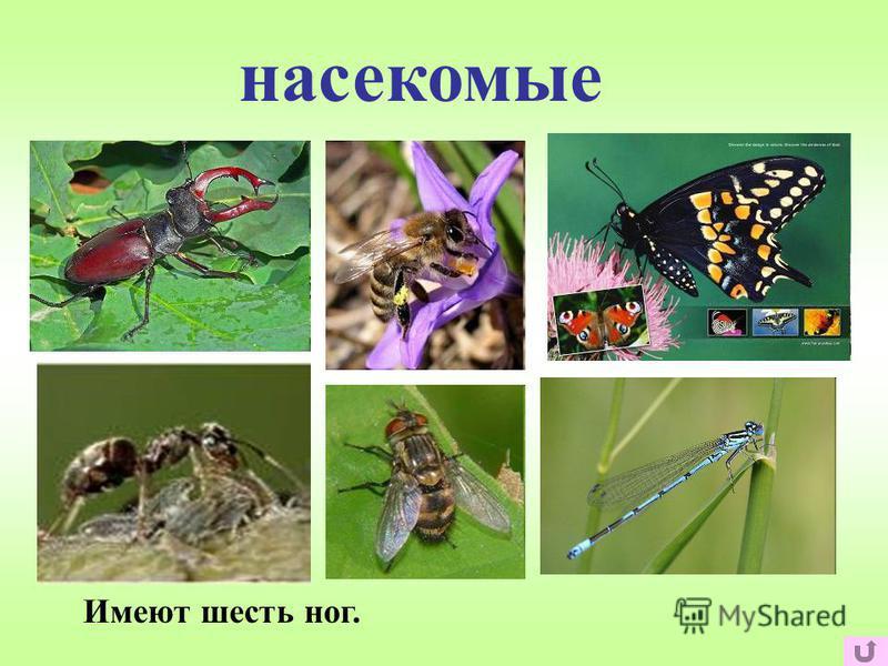 насекомые Имеют шесть ног.