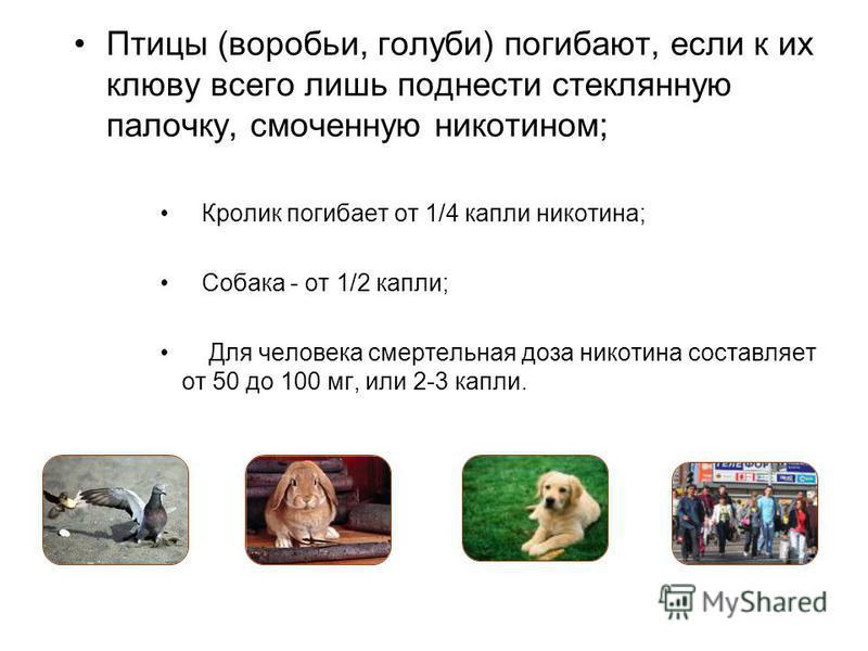 Птицы (воробьи, голуби) погибают, если к их клюву всего лишь поднести стеклянную палочку, смоченную никотином; Кролик погибает от 1/4 капли никотина; Собака - от 1/2 капли; Для человека смертельная доза никотина составляет от 50 до 100 мг, или 2-3 ка