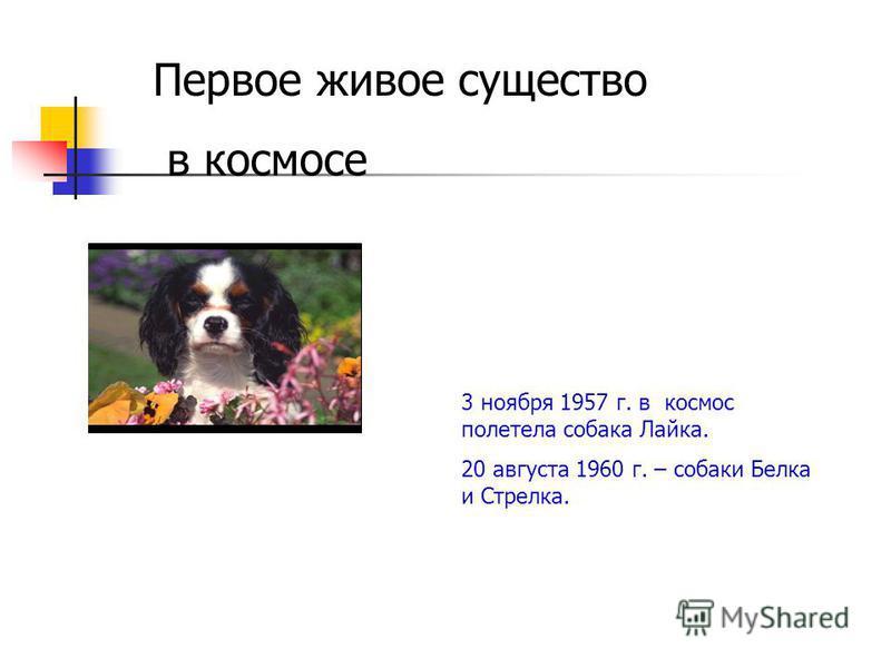 Первое живое существо в космосе 3 ноября 1957 г. в космос полетела собака Лайка. 20 августа 1960 г. – собаки Белка и Стрелка.