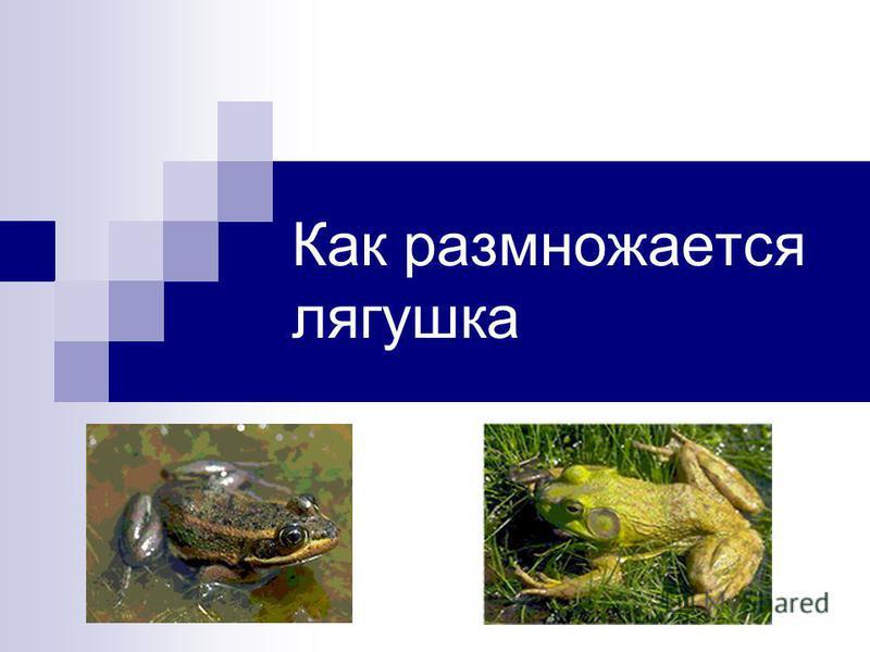 Как размножается лягушка