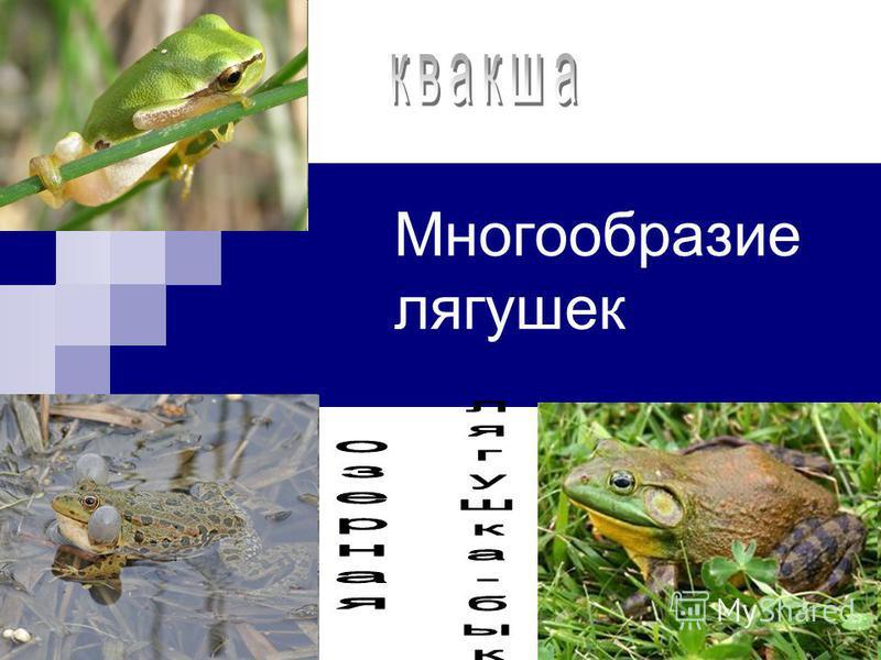 Многообразие лягушек