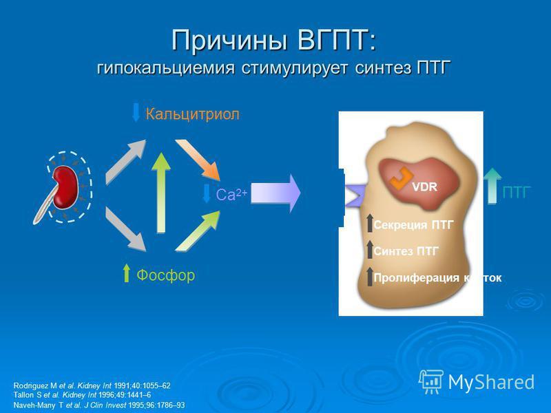 VDR Секреция ПТГ Синтез ПТГ Пролиферация клеток Причины ВГПТ: гипокальциемия стимулирует синтез ПТГ Rodriguez M et al. Kidney Int 1991;40:1055–62 Tallon S et al. Kidney Int 1996;49:1441–6 Naveh-Many T et al. J Clin Invest 1995;96:1786–93 Кальцитриол