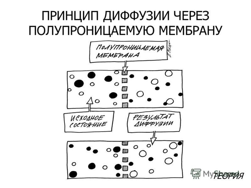 ТЕОРИЯ ПРИНЦИП ДИФФУЗИИ ЧЕРЕЗ ПОЛУПРОНИЦАЕМУЮ МЕМБРАНУ