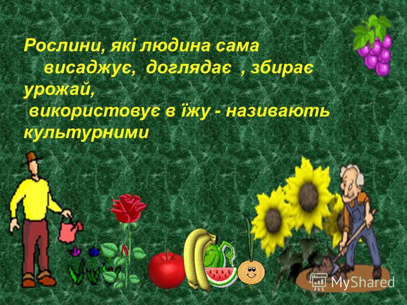 Рослини, які людина сама висаджує, доглядає, збирає урожай, використовує в їжу - називають культурними