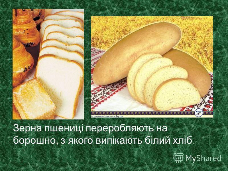 Зерна пшениці переробляють на борошно, з якого випікають білий хліб.