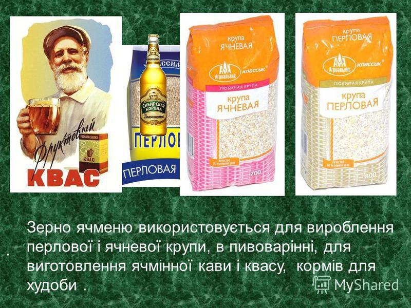 . Зерно ячменю використовується для вироблення перлової і ячневої крупи, в пивоварінні, для виготовлення ячмінної кави і квасу, кормів для худоби.