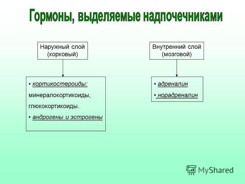 Наружный слой (корковый) Внутренний слой (мозговой) кортикостероиды: минералокортикоиды, глюкокортикоиды. андрогены и эстрогены адреналин норадреналин