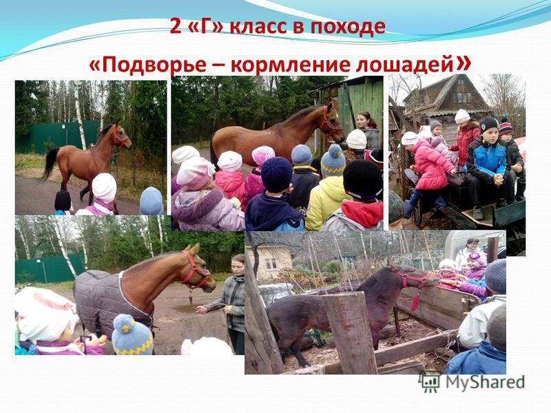 2 «Г» класс в походе «Подворье – кормление лошадей »