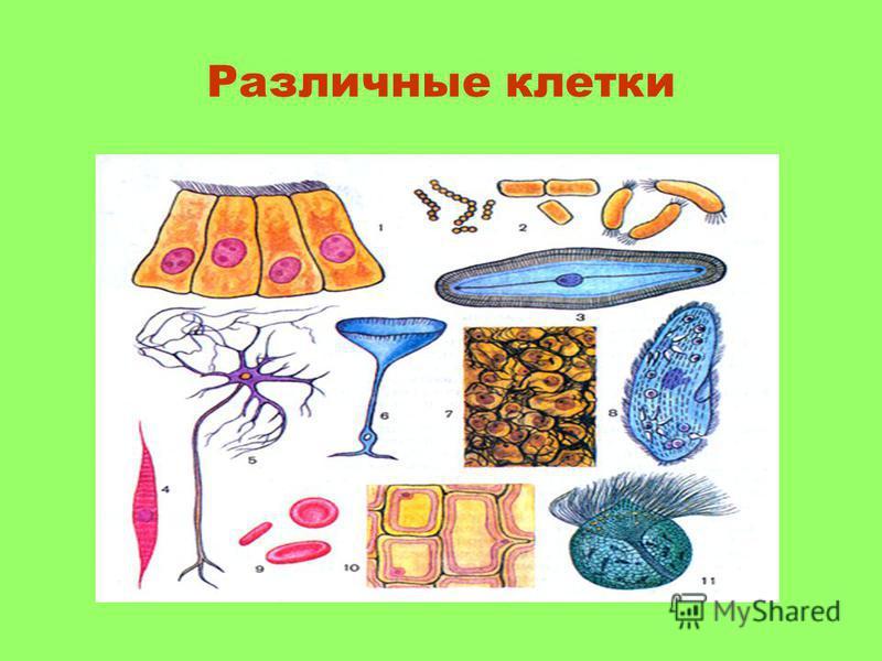 Различные клетки