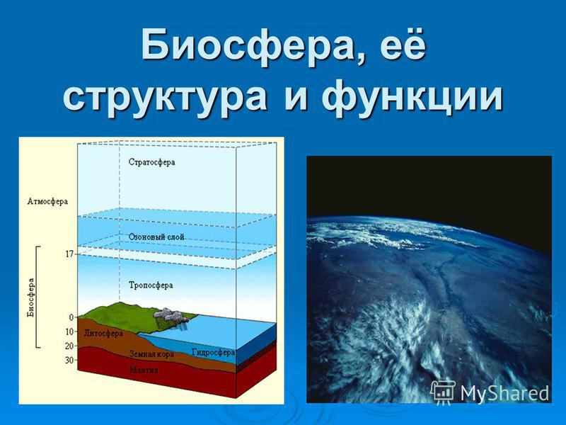 Биосфера, её структура и функции