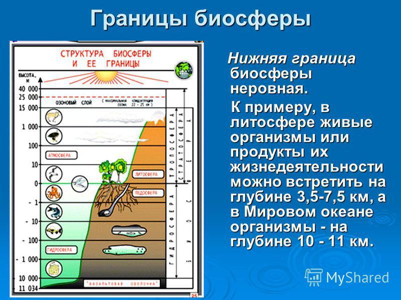 Нижняя граница биосферы неровная. Нижняя граница биосферы неровная. К примеру, в литосфере живые организмы или продукты их жизнедеятельности можно встретить на глубине 3,5-7,5 км, а в Мировом океане организмы - на глубине 10 - 11 км. К примеру, в лит