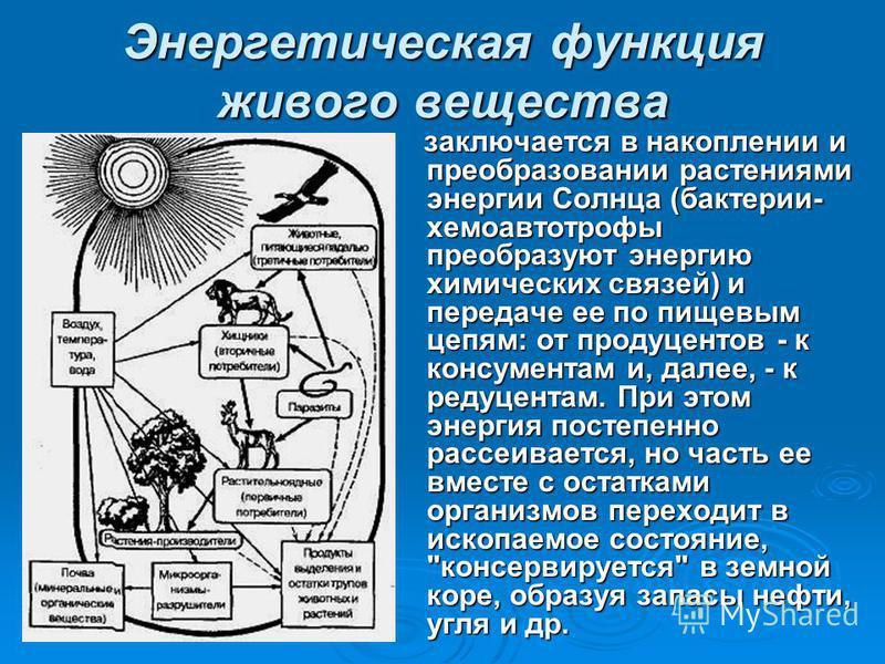 Энергетическая функция живого вещества заключается в накоплении и преобразовании растениями энергии Солнца (бактерии- хемоавтотрофы преобразуют энергию химических связей) и передаче ее по пищевым цепям: от продуцентов - к консументам и, далее, - к ре