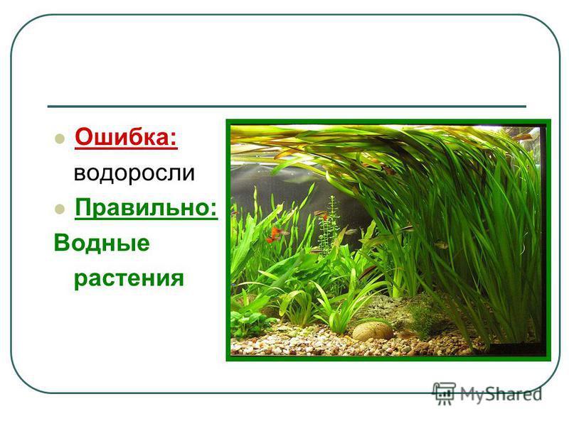 Ошибка: водоросли Правильно: Водные растения