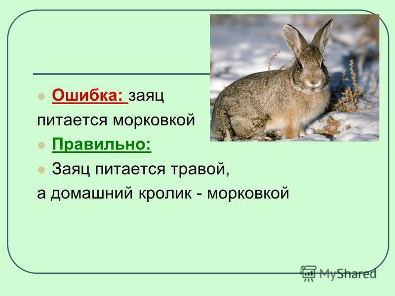 Ошибка: заяц питается морковкой Правильно: Заяц питается травой, а домашний кролик - морковкой