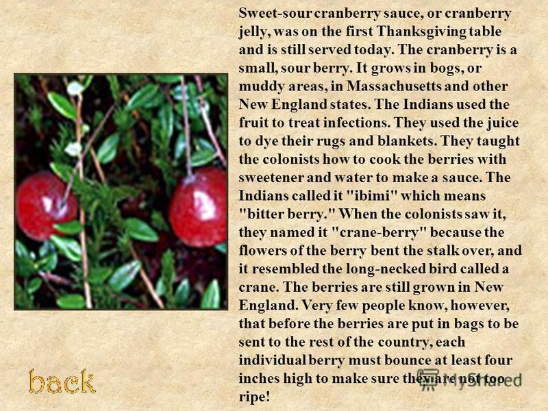 Sweet-sour cranberry sauce, or cranberry jelly, was on the first Thanksgiving table and is still served today. The cranberry is a small, sour berry. It grows in bogs, or muddy areas, in Massachusetts and other New England states. The Indians used the