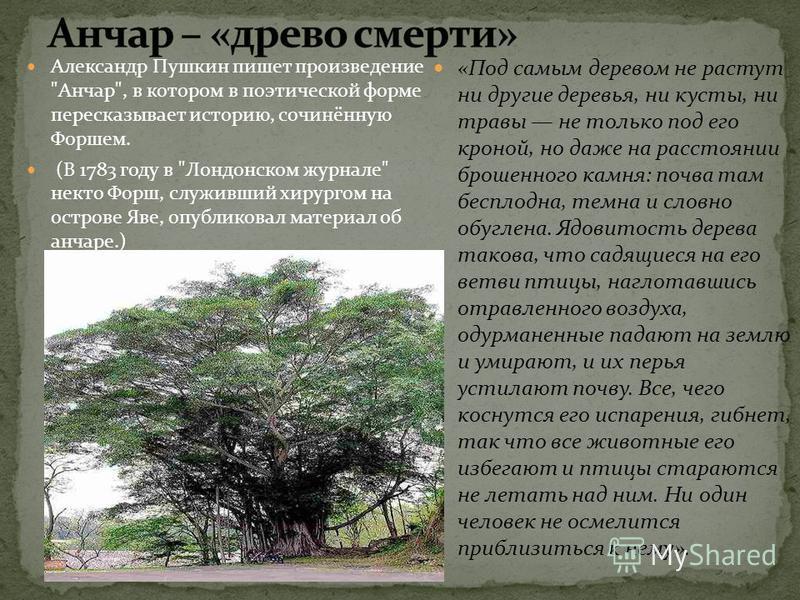 Александр Пушкин пишет произведение