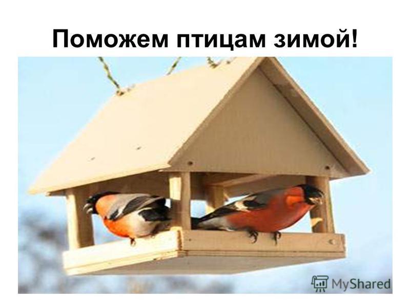 Поможем птицам зимой!