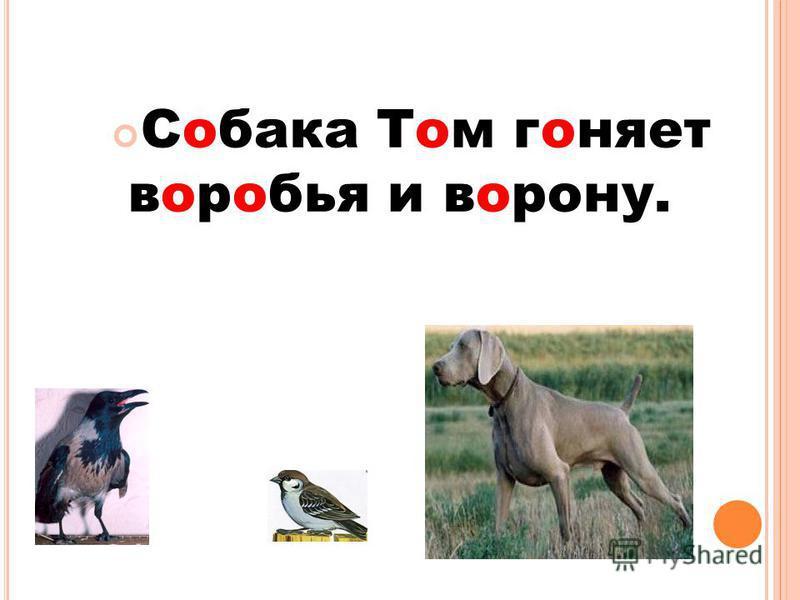 Собака Том гоняет воробья и ворону.