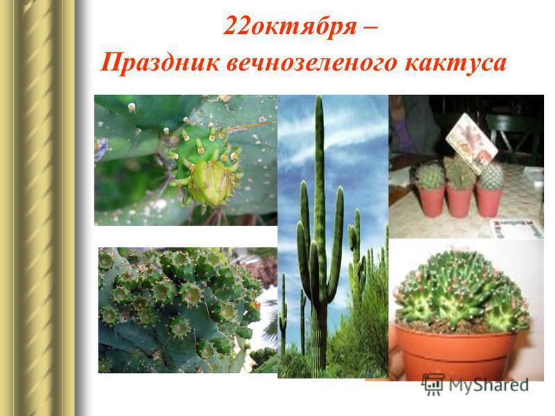22 октября – Праздник вечнозеленого кактуса