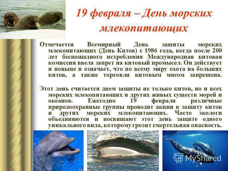 19 февраля – День морских млекопитающих Отмечается Всемирный День защиты морских млекопитающих (День Китов) с 1986 года, когда после 200 лет беспощадного истребления Международная китовая комиссия ввела запрет на китовый промысел. Он действует и поны