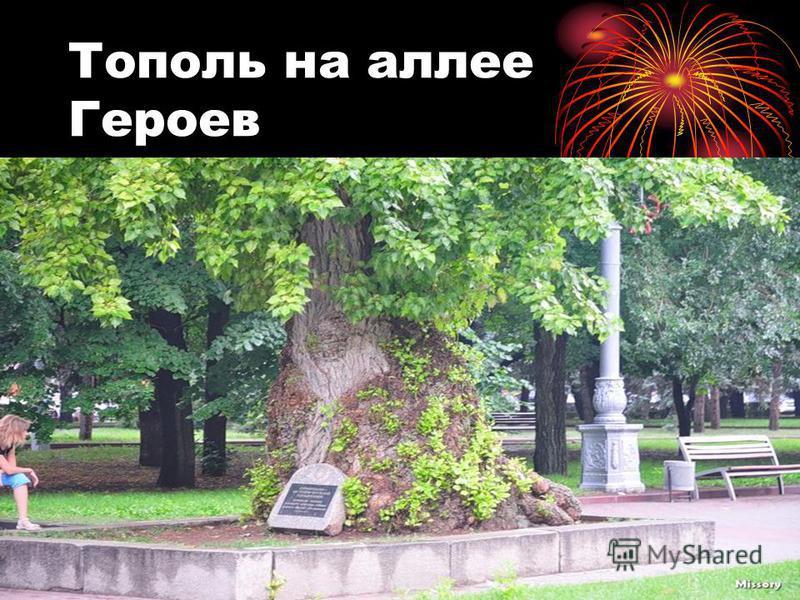 Тополь на аллее Героев