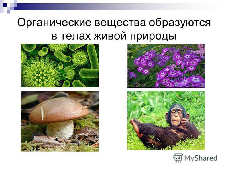 Органические вещества образуются в телах живой природы