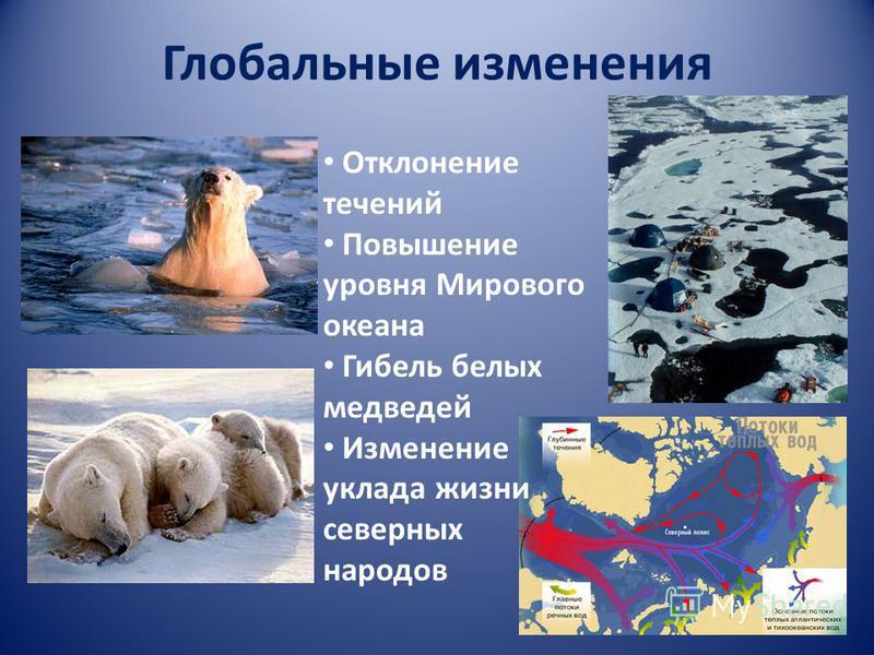 Глобальные изменения Отклонение течений Повышение уровня Мирового океана Гибель белых медведей Изменение уклада жизни северных народов