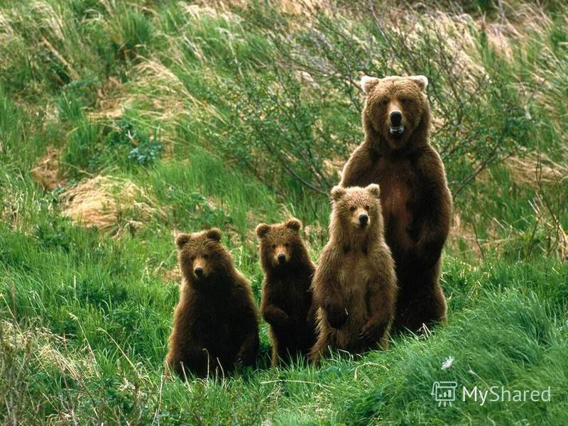 ШУМ ЧЕЛОВЕК ПИЩА МАШИНЫ ВОДА ВОЗДУХ ТРАНСПОРТ РАСТЕНИЯ КНИГИ СВЕТ ТЕПЛО МУСОР Что необходимо животным для жизни?