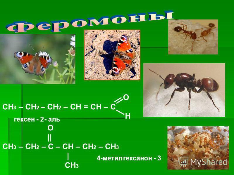 О СН 3 – СН 2 – СН 2 – СН = СН – С Н O || СН 3 – СН 2 – С – СН – СН 2 – СН 3 | CH 3 гексен - 2 - аль 4-метил гексанон - 3