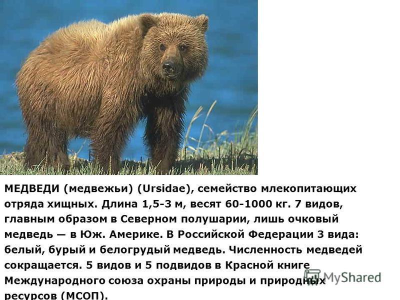 МЕДВЕДИ (медвежьи) (Ursidae), семейство млекопитающих отряда хищных. Длина 1,5-3 м, весят 60-1000 кг. 7 видов, главным образом в Северном полушарии, лишь очковый медведь в Юж. Америке. В Российской Федерации 3 вида: белый, бурый и белогрудый медведь.