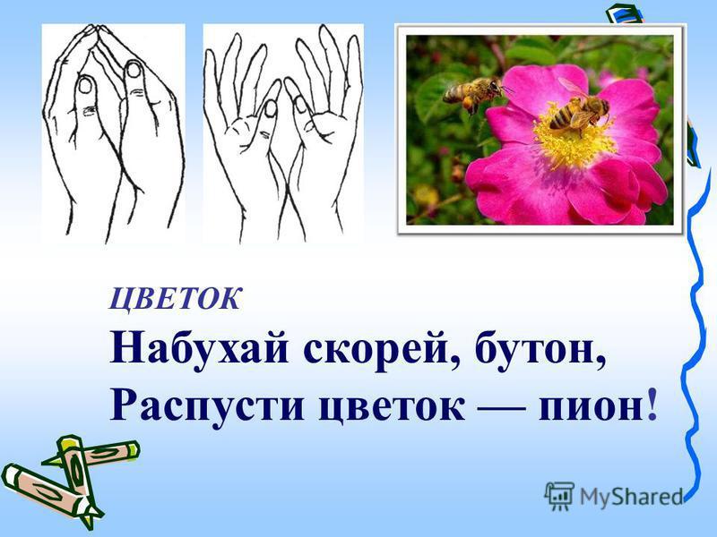 ЦВЕТОК Набухай скорей, бутон, Распусти цветок пион!