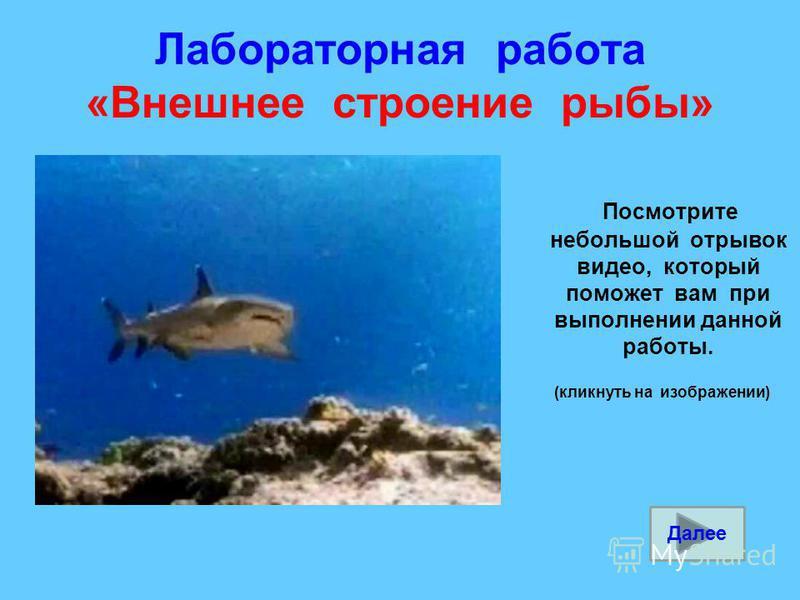 Лабораторная работа «Внешнее строение рыбы» Посмотрите небольшой отрывок видео, который поможет вам при выполнении данной работы. (кликнуть на изображении) Далее