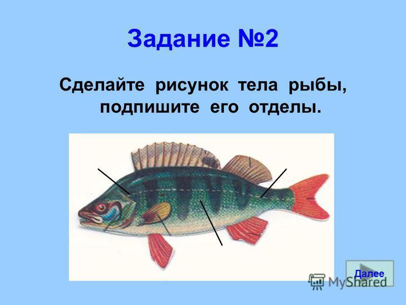 Задание 2 Сделайте рисунок тела рыбы, подпишите его отделы. Далее