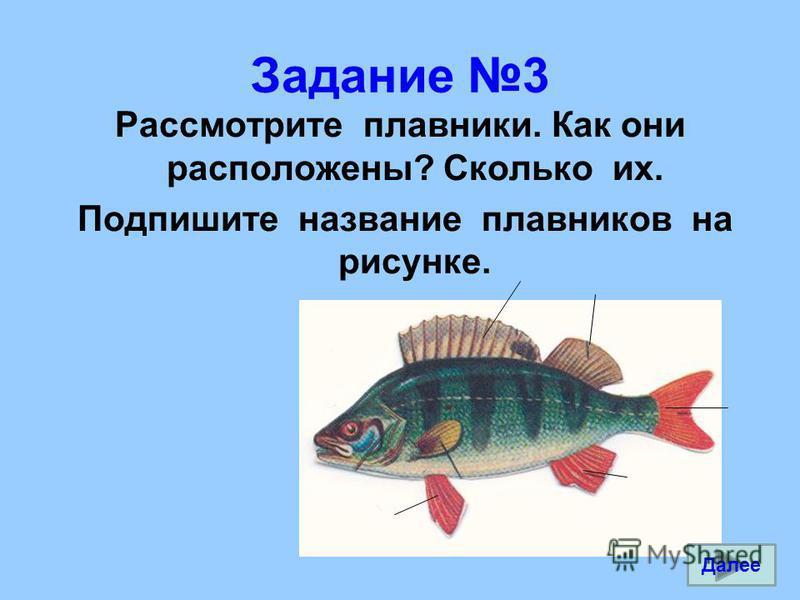 Задание 3 Рассмотрите плавники. Как они расположены? Сколько их. Подпишите название плавников на рисунке. Далее